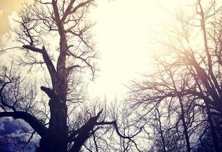 old dead trees sky